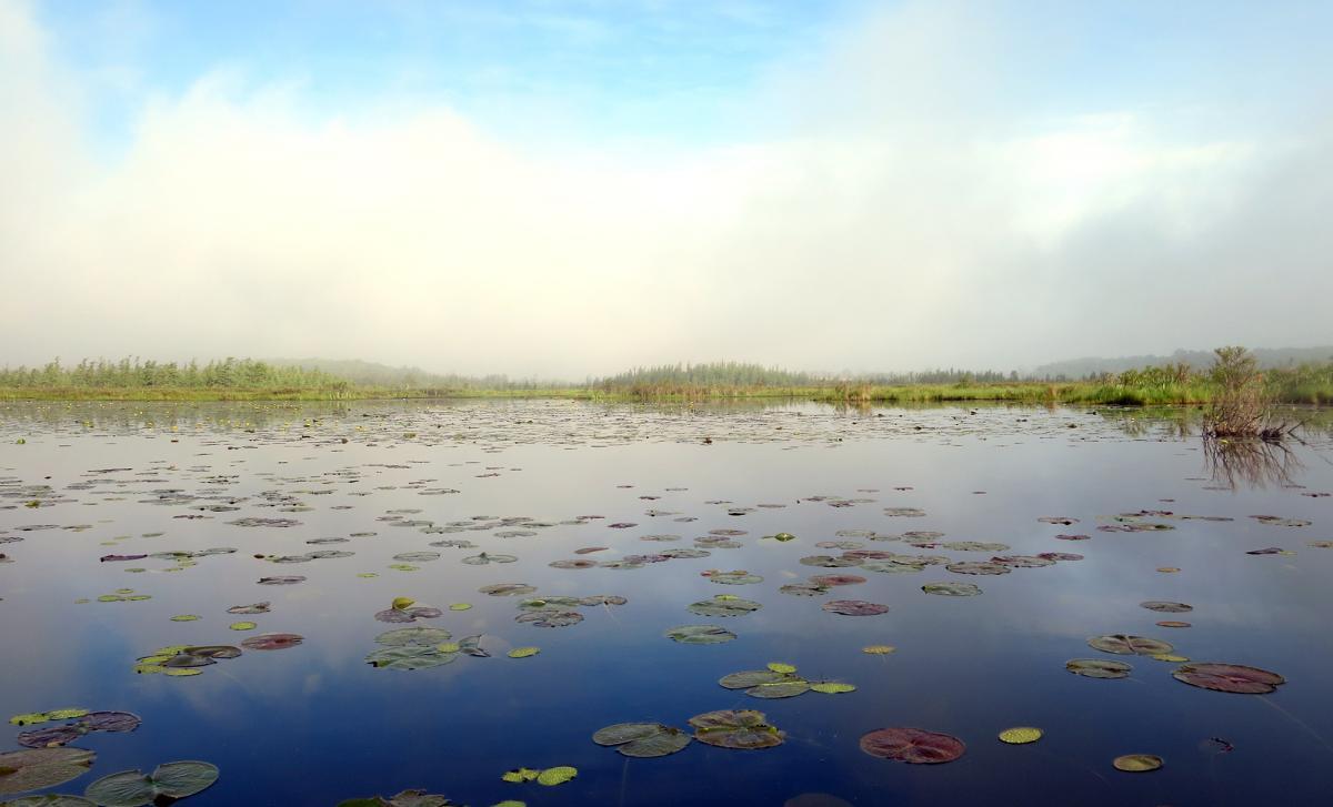 Hook Lake Bog State Natural Area (WI DNR)